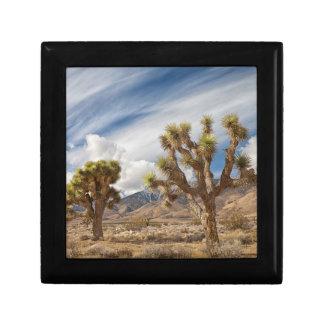 Joshua Trees in Desert Gift Box
