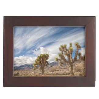 Joshua Trees in Desert Keepsake Box