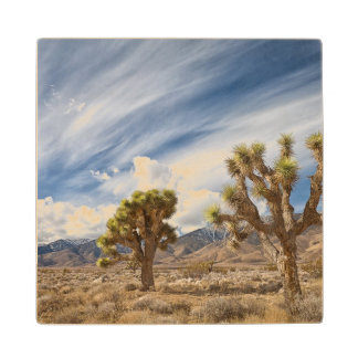 Joshua Trees in Desert Wood Coaster