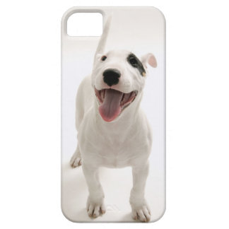 Joyful Bull terrier iPhone 5 Cover