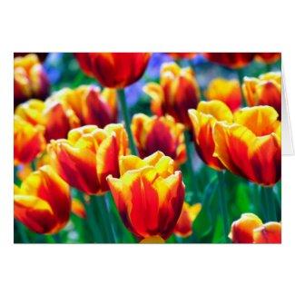 Joyful Summer's Flame coloured Tulips