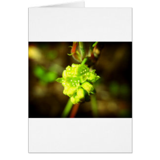 Joyfyl Springtime Greeting Card