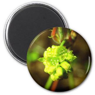 Joyfyl Springtime 6 Cm Round Magnet