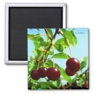 Joys of summer - red cherries magnet