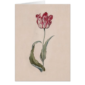 Judith Leyster Tulip Note Card