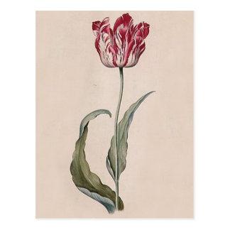 Judith Leyster Tulip Postcard