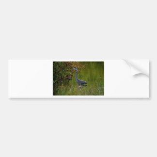 July s Blue Heron Bumper Stickers