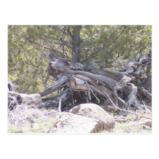 Jumble of Aging Wood Postcard