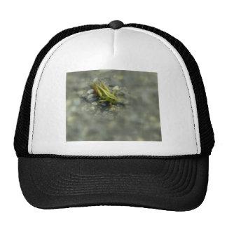 jumper trucker hat