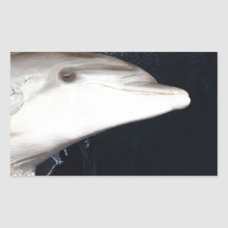 Jumping dolphin rectangular sticker