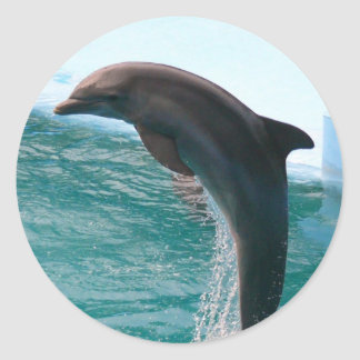 Jumping Dolphin Stickers
