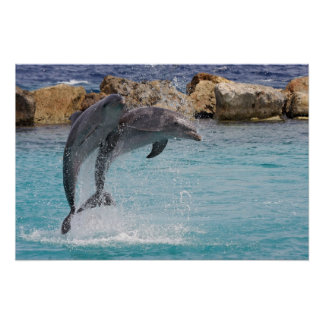 jumping dolphins print