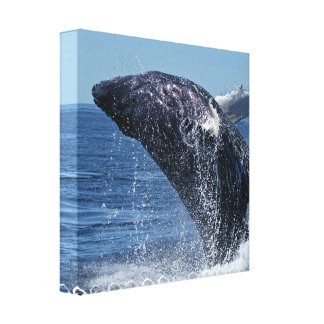 Jumping Humpback Whale  Canvas Print
