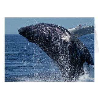 Jumping Humpback Whale Greeting Cards