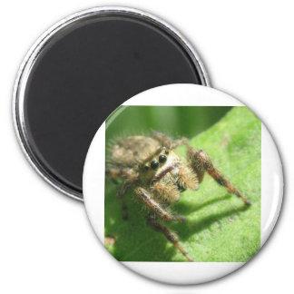 Jumping Spider Refrigerator Magnet