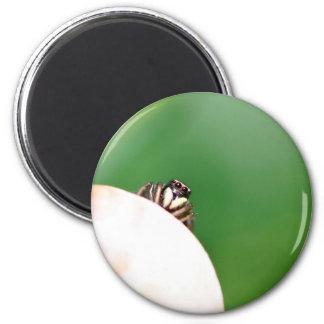Jumping spider 6 cm round magnet