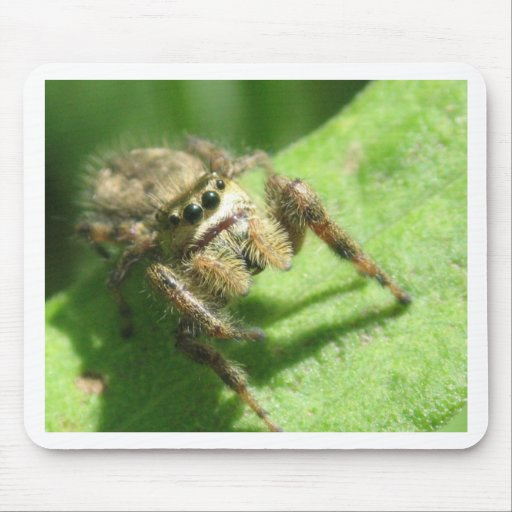 Jumping Spider Mousepads
