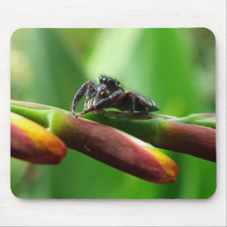 Jumping spider mouse pad