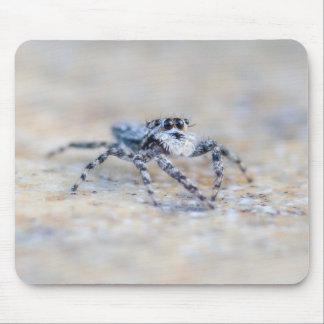 Jumping Spider Mouse Pads