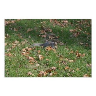 Jumping Squirrel Poster