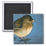 JUNCO BIRD DRAWING MAGNETS