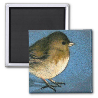 JUNCO BIRD DRAWING SQUARE MAGNET