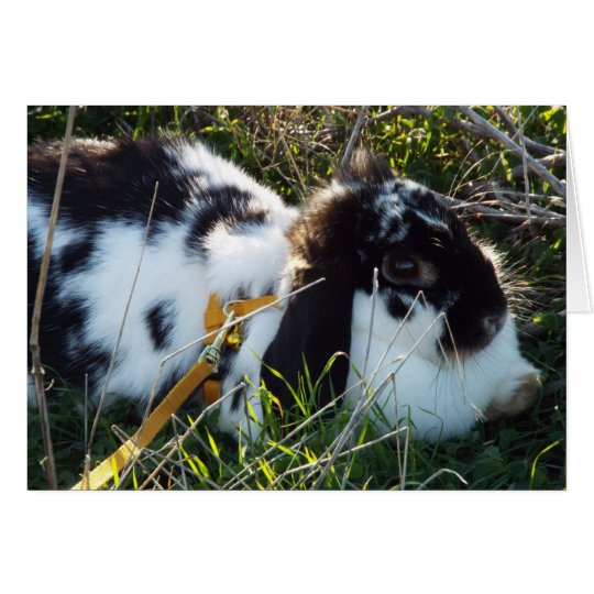 June Bunny Card