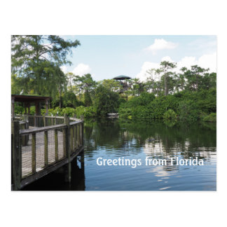 jungle and swamps in Florida Postcard