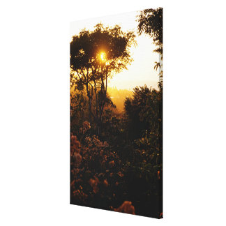 Jungle at sunset, Bali, Indonesia Gallery Wrapped Canvas
