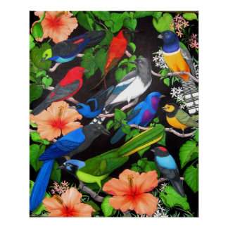 Jungle Birds of Central America Poster