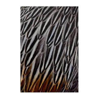 Jungle cock feathers close-up acrylic wall art