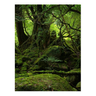 Jungle Forest of Moss Postcard