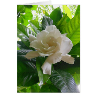 Jungle Gardenia Card