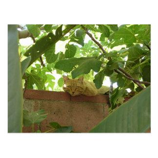 Jungle Kitty Postcard
