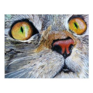 Junior the Cat Postcard