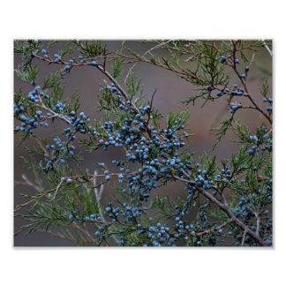 Juniper berries photo art