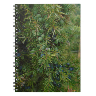 juniper boho woodland green forest notebook
