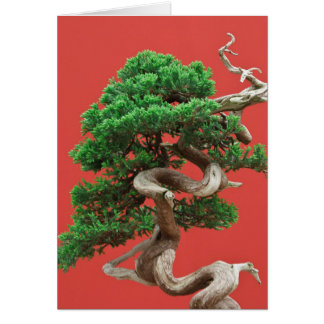 Juniper bonsai greeting card