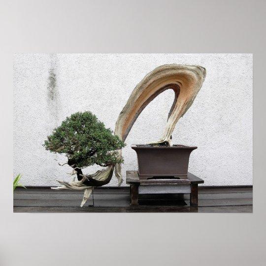 Juniper Bonsai Poster