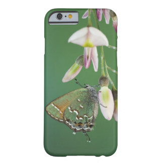Juniper Hairstreak, Callophrys gryneus, adult on Barely There iPhone 6 Case