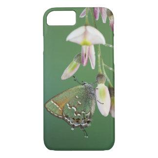 Juniper Hairstreak, Callophrys gryneus, adult on iPhone 8/7 Case