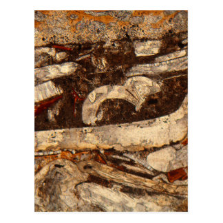 Jurassic shells under the microscope postcard