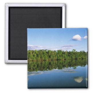Juruena, Brazil. Forested river bank reflected Square Magnet