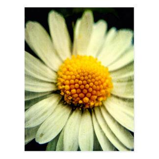 Just a Daisy Postcard
