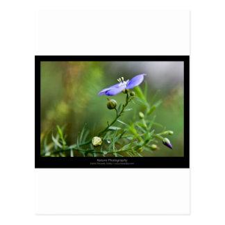 Just a flower – Blue flower 002 Postcard