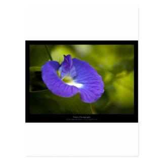 Just a flower – Blue flower 006 Postcard