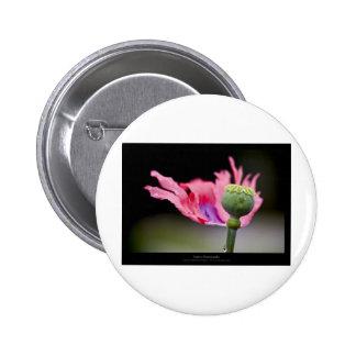 Just a flower – Pink poppy flower 015 6 Cm Round Badge