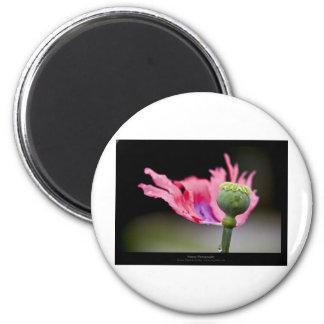 Just a flower – Pink poppy flower 015 6 Cm Round Magnet