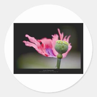 Just a flower – Pink poppy flower 015 Round Stickers