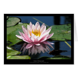 Just a flower – Pink waterlily flower 007 Greeting Cards